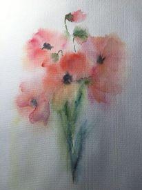 Mohn, Frühling, Blüte, Farben