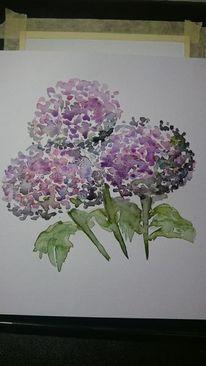Aquarell, Hortensien