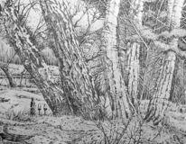 Baum, Wein, Natur, Zeichnung