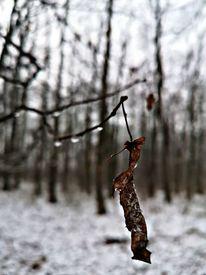 Natur, Baum, Fotografie