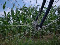 Feld, Fahrrad, Mais, Fotografie
