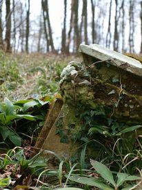 Pflanzen, Stein, Wald, Natur