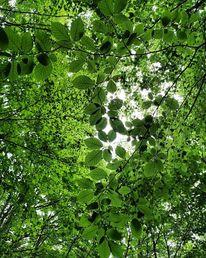 Natur, Leben, Fotografie