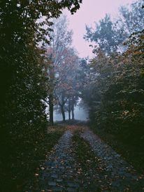 Baum, Nebel, Natur, Fotografie