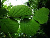 Blätter, Natur, Wald, Fotografie
