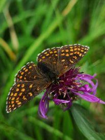 Schmetterling, Natur, Pflanzen, Fotografie