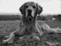 Tiere, Hund, Natur, Fotografie