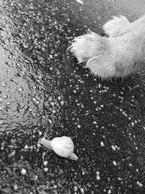 Tiere, Hund, Schnecke, Fotografie