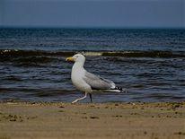 Möwe, Tiere, Strand, Vogel