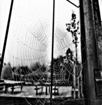 Tiere, Spinnennetz, Natur, Fotografie