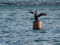 Vogel, Tiere, Wasser, Fotografie
