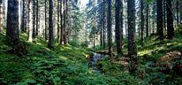 Wald, Natur, Bach, Fotografie