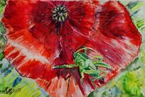 Mohn, Grashüpfer, Aquarell,