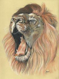 Löwe, Zeichnung, Rötel, Zeichnungen