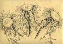 Pflanzen, Silberdistel, Tuschezeichnung, Zeichnungen