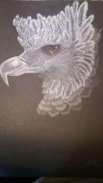 Vogel, Zeichnung, Schwarz, Harpyie