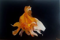 Orange, Schleierschwanz, Schwarz, Fisch