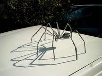 Beton, Licht, Tiere, Spinne