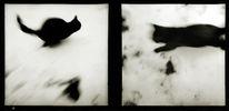 Fotografie, Schwarzekatze, Schnee, Katze