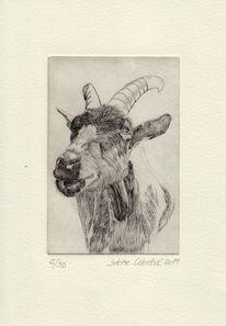 Druckgrafik, Tiere, Radierung, Zeichnung