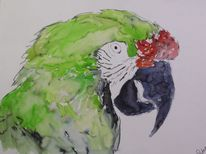 Tiere, Papagei, Soldaten ara, Vogel