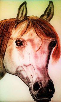 Zeichnung, Nüstern, Tiere, Stute