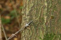 Rinde, Baum, Metall, Natur