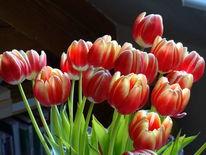 Rot, Blätter, Blumen, Grün