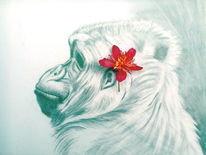 Portrait, Gorilla, Zeichnung, Zeichnungen