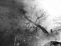 Spiegelung, Fragment, Zweig, Natur