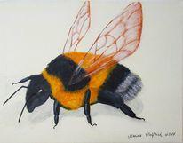 Hummel, Tiere, Biene, Malerei