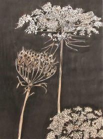 Zeichnung, Blumen, Wilde möhre, Tusche