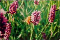 Wiese, Blumen, Lavendel, Plakatkunst