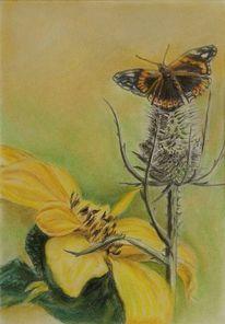 Distel, Mariendistel, Schmetterling, Sonnenblumen
