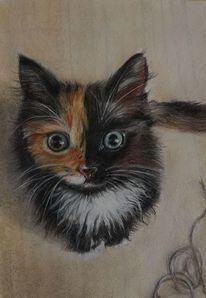 Lustig, Katze, Zeichnungen