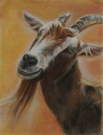 Ziegenbock, Tiere, Natur, Malerei