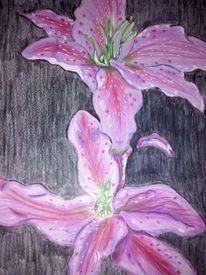 Pflanzen, Lilien, Natur, Zeichnung