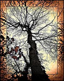 Digital, Fotografie, Baum, Natur