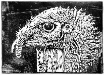 Vogel, Linolschnitt, Pute, Kopf