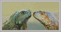 Kopf, Reptil, Drache, Felsen