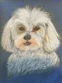 Maltipu, Hund, Pastellmalerei, Portrait