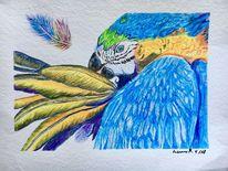 Aquarellmalerei, Blau, Vogel, Zeichnungen