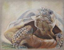 Schildkröte, Acrylmalerei, Malerei,