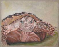 Schildkröte, Baby, Acrylmalerei, Malerei