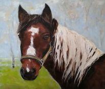 Licht, Nebel, Weide, Pferde