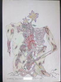 Anatomie, Leben, Natur, Vergänglichkeit