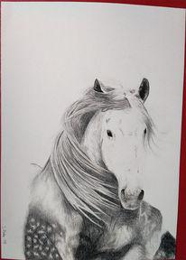 Pferde, Andalusier, Buntstiftzeichnung, Zeichnungen