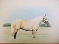 Pferde, Buntstiftzeichnung, Quarter horse, Zeichnungen