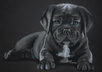 Pastellmalerei, Hund, Tierzeichnung, Zeichnungen