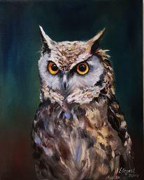 Natur, Eule, Vogel, Ölmalerei